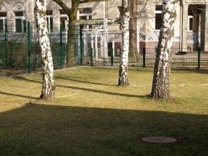 Bäume - Gartenservice Tessin